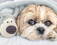 3 tips for managing your dog's laundry
