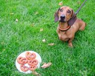 Doggy Pizza Pretzels