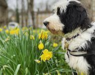 9 things your dog should avoid this Easter time