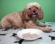 Rice Pudding For Dogs