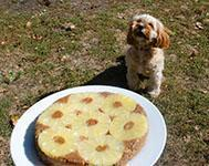 Pineapple pupside down cake