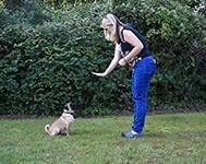 Dog Training Tip: How to teach your dog to stay