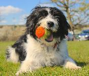 Holiday for your Dog (tips for when you're travelling)