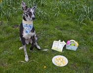 Easter egg dog treats