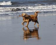 UK Dog Friendly Beaches