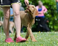 Staying physically active with your dog