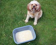 DIY Oatmeal Doggy Foot Bath