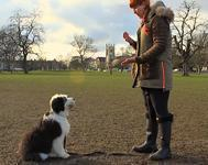 Dog Training Tips - Do's and Dont's