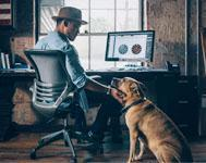 6 ways to make a workplace dog-friendly