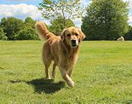 Great Places to Walk Your Dog in London