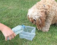 Dog Training Tip: 7 Dog Summer Tips