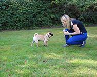 Dog Training Tip: How to teach your dog to come when called