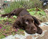 Is a puppy the right pet for you?