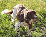Great Places to Walk Your Dog in Suffolk