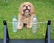 DIY Spin The Bottle Dog Toy