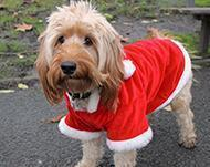 Christmas Dog Safety Tips