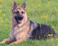 5 top tips for your dog this Easter