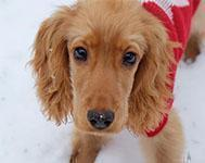 Top tips to help keep your dog safe and warm