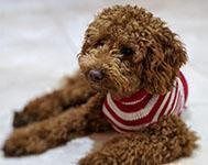 Mysterious Vomiting Virus Affecting UK Dogs