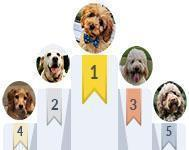 The most popular dog names