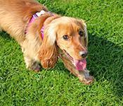 Dog Friendly Places in the UK and Ireland