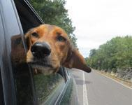 Car safety tips for dogs