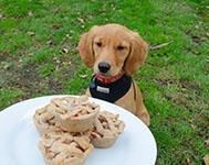 Dog apple pie