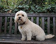 Great Places to Walk Your Dog in Newcastle