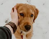 3 ways dogs can improve our mental wellbeing