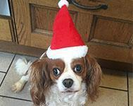 A Merry Christmas for Dogs: Dave's Top 10 Tips