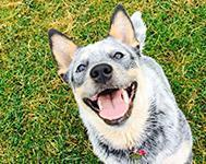 Top 5 Dog Breeds For Country Living