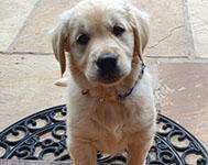 Everything you should know before getting a puppy