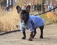 Great Places to Walk Your Dog in Brighton