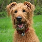 Great Local Walks for You and Your Dog