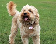 Great Places to Walk Your Dog in Aberdeen
