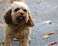 Great Places to Walk Your Dog in Southampton