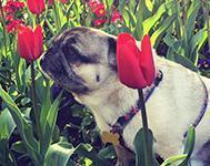 Top 5 Dogs For City Living