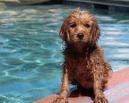Protect your dog from heat stroke