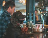 How to get your dog used to the pub