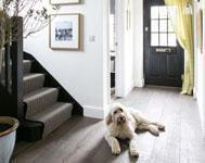 Tips for creating a dog safe home