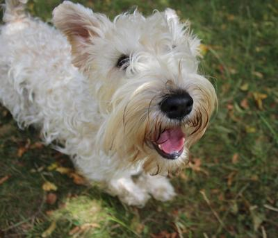 A Guide to Dog Breeds