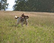 Great Places to Walk Your Dog in Cambridge
